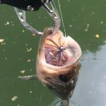 自作スモラバでバス釣ったった!萩尾溜池ボート釣行