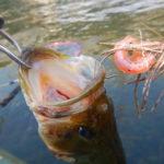 久しぶりのスピニング!ベイトフィネスジグは釣れるスモラバだった
